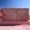 Petrified Forest : Petrified Forest - Arizona